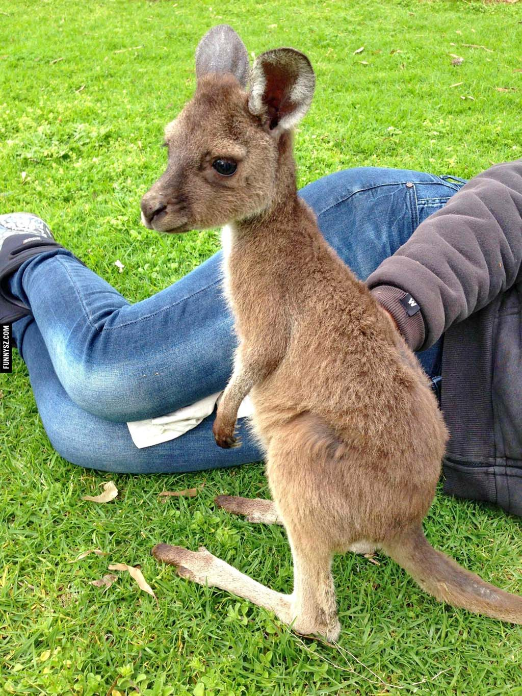 Baby Kangaroo,Kangaroo,baby animals,most adorable baby animals,cute baby animal