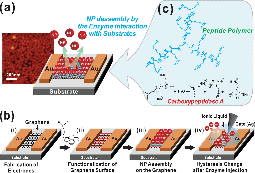 Bio-molecular sensor based on graphene-coated NPs for the selective detection of cancer markers